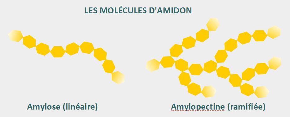schéma amidon amylose amylopectine