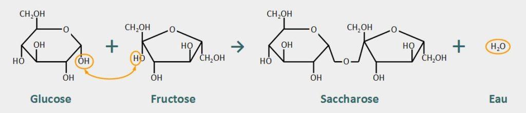 schéma molécules saccharose glucose fructose